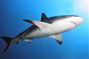 Govt warns about Shark Sightings in the Caribbean